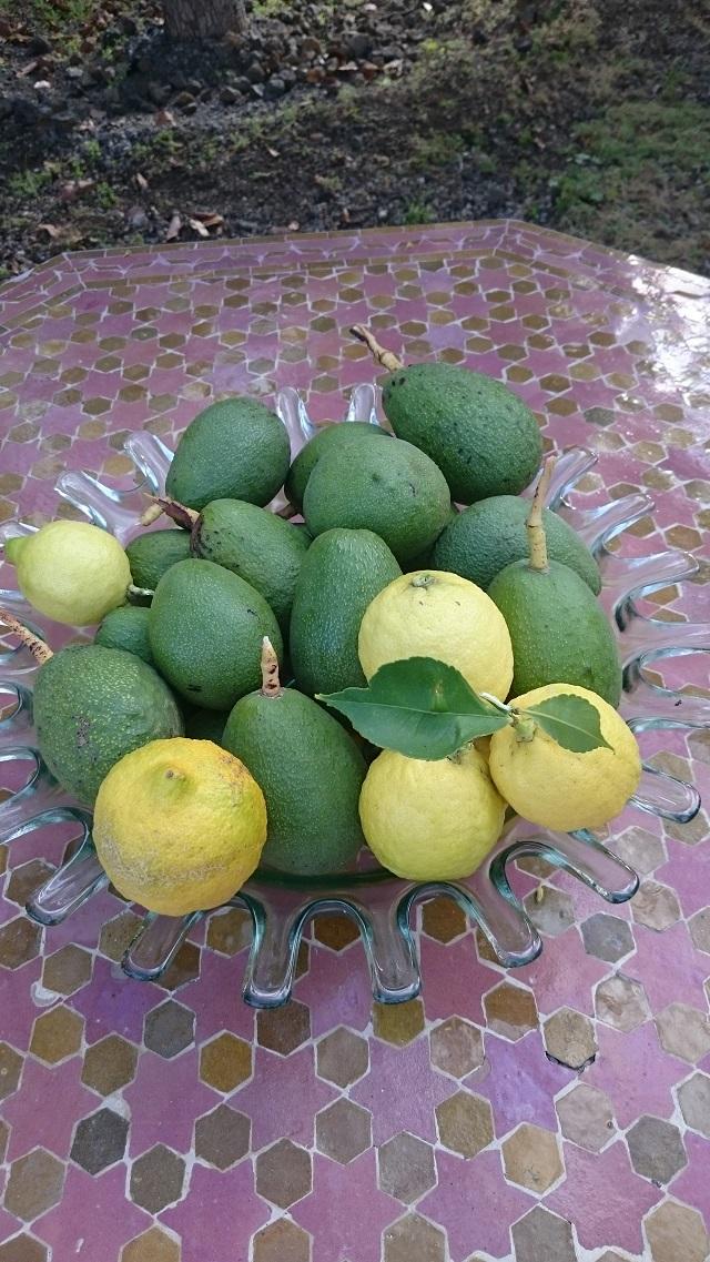Avocados, Zitronen